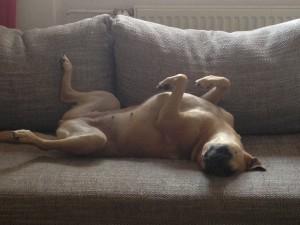 Hundehaftpflicht DA Direkt