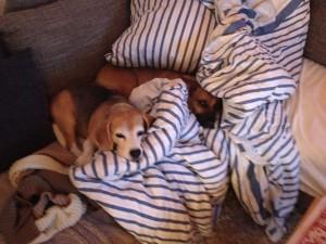 Ergo Hundeversicherung
