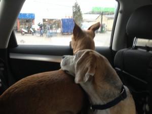 LVM Hundehaftpflicht Test