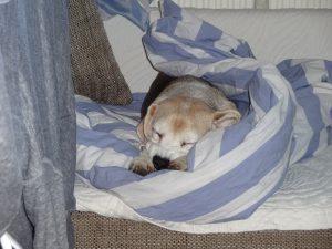 Provinzial Hundehaftpflicht Kosten
