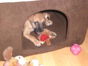 AachenMünchener Hundehaftpflichtversicherung
