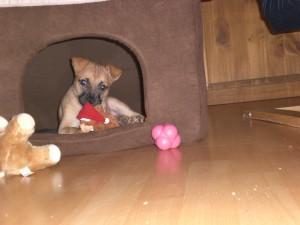 Hundehaftpflicht Ausland