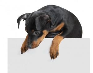 Hundehaftpflicht für Rottweiler