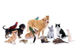 HanseMerkur Hundehaftpflicht Test