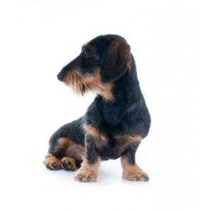 Janitos Hundehaftpflicht Erfahrung
