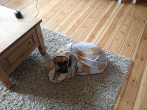 Hundehaftpflicht für Züchter