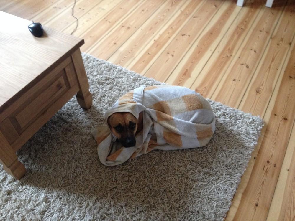 huk hundehaftpflicht test erfahrungen und kosten im detail. Black Bedroom Furniture Sets. Home Design Ideas