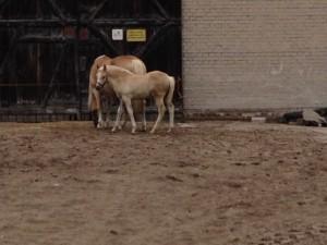 LVM Pferdehaftpflicht Test der Kosten