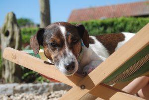 Hundehaftpflicht Jack Russell Terrier