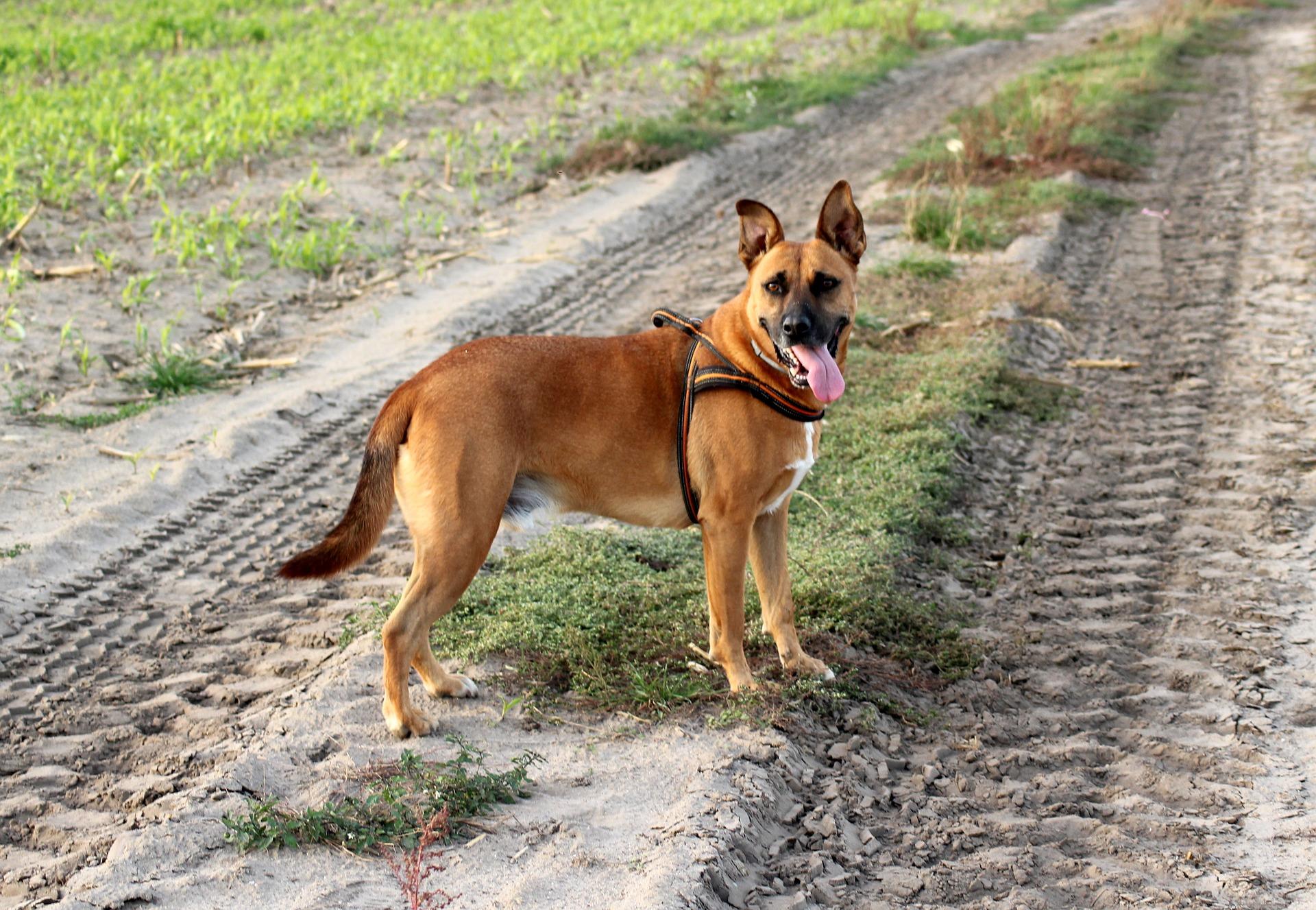 Hundehaftpflicht im eigenen Haushalt