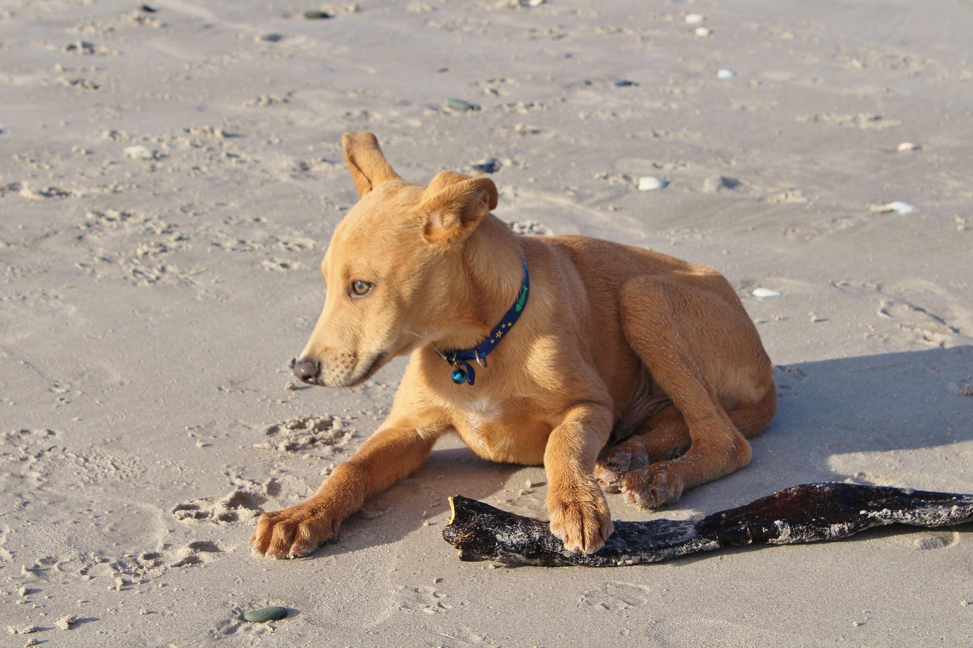 Vhv Hundehaftpflicht Test Und Erfahrungen Mit Den Bedingungen