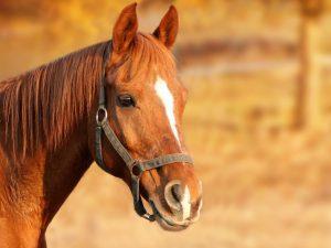 LVM Pferdehaftpflicht