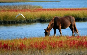 Pferdehaftpflichtversicherung Test 2017
